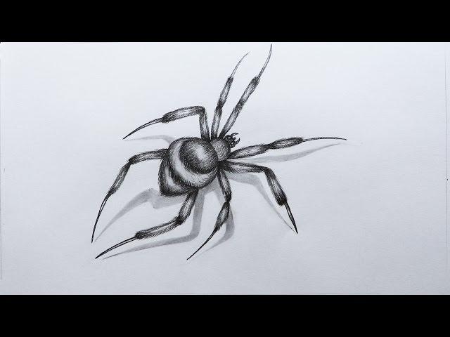 Укус паука — симптомы и лечение